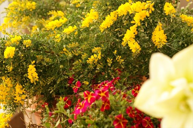 玄関先の草花たち