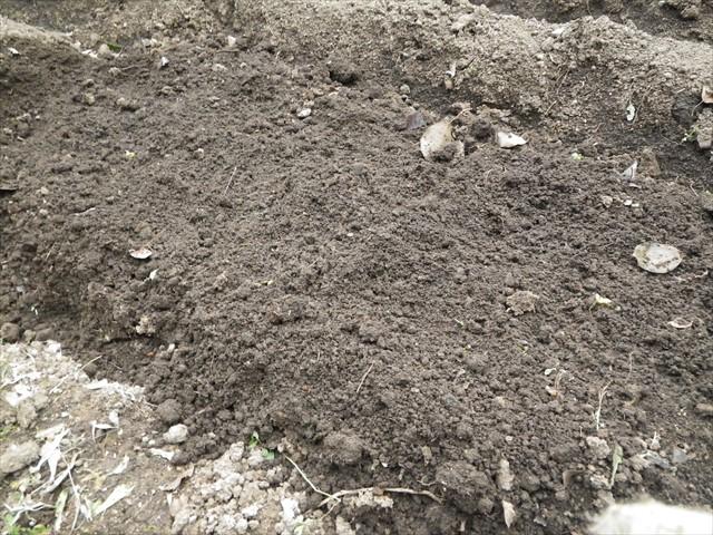 正しいジャガイモの植え方