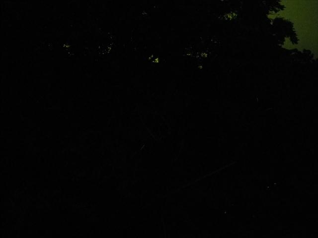蛍の乱舞-1