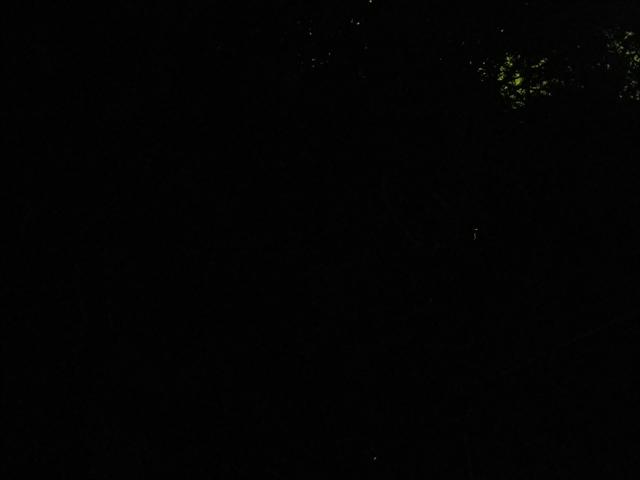 蛍の乱舞-2