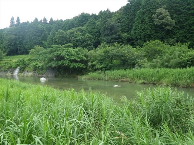 葦の向こうは祓川
