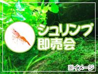 pet_eve_shrimp.jpg