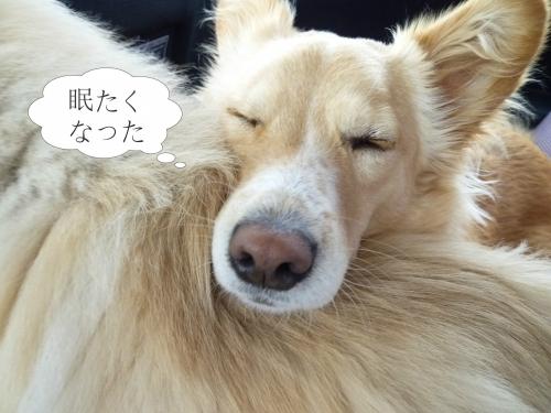 眠たくなった