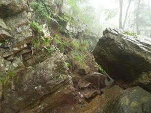 9ネコ岩20160723