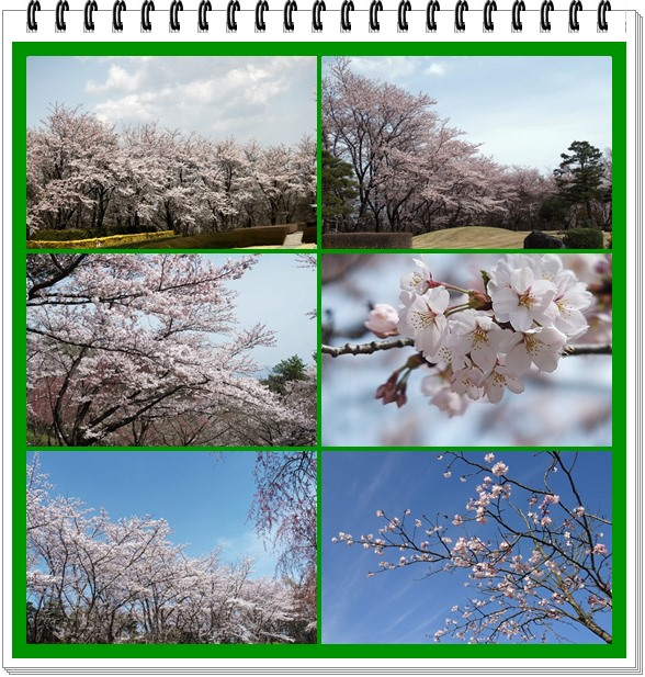 逢瀬公園の桜