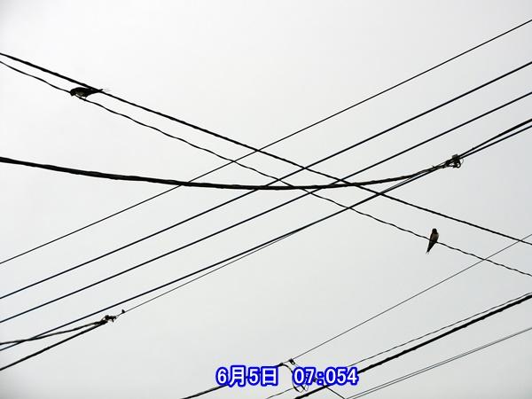 CIMG0196.jpg