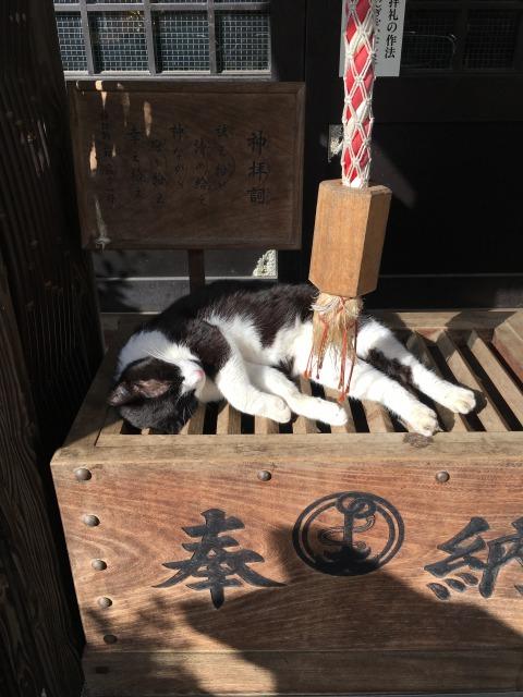 奉納猫さん