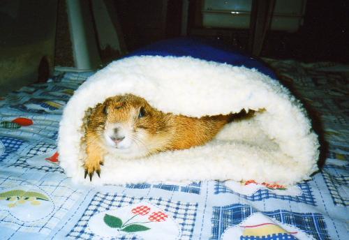 レックス寝袋