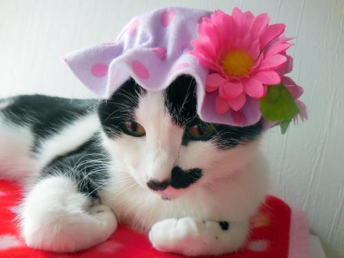 くぅ紫帽子