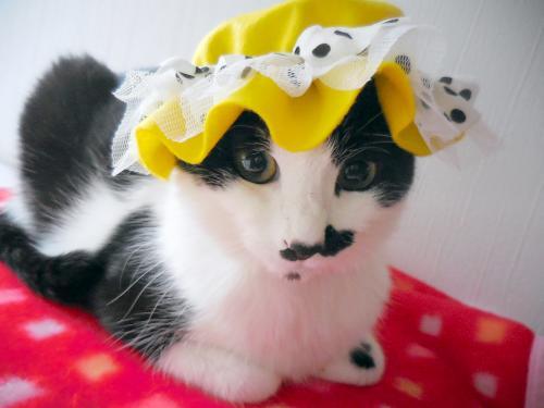 くぅ黄色帽子