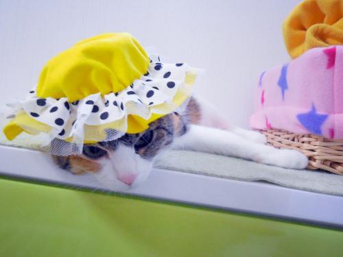 みく黄色帽子