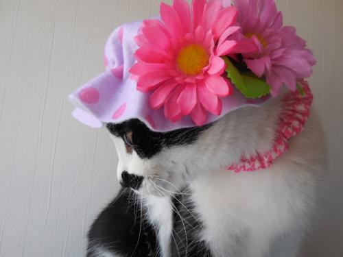 くぅ紫花帽子横顔
