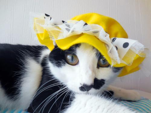 くぅ黄色帽子キョトン