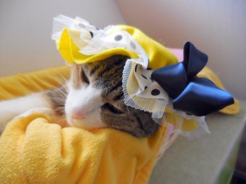 みく黄色帽子おねむ