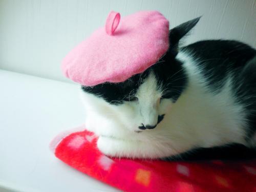 くぅベレー帽