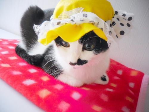 くぅ黄色帽子別タイプ