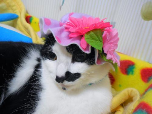 くぅお花帽子寝床