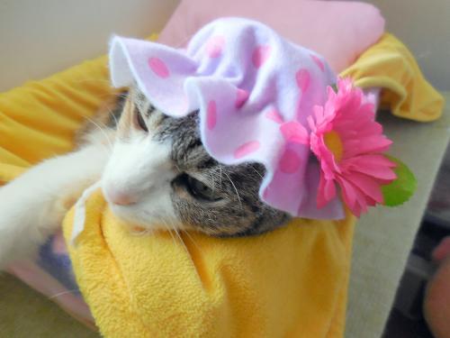 みくお花帽子寝床
