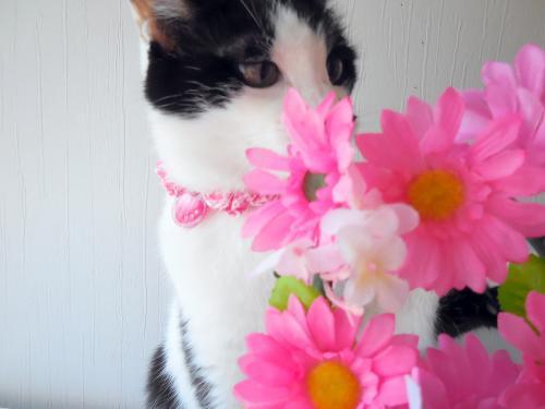 くぅお花で遊ぶ
