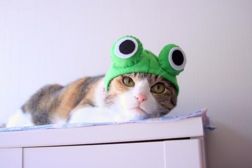 みくカエル