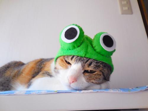 みくカエル寝