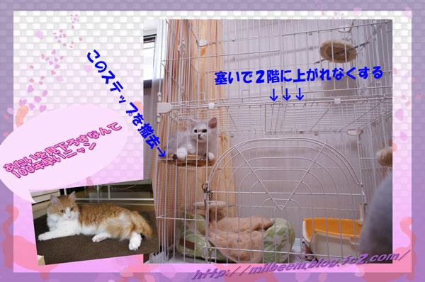 kyori001.jpg
