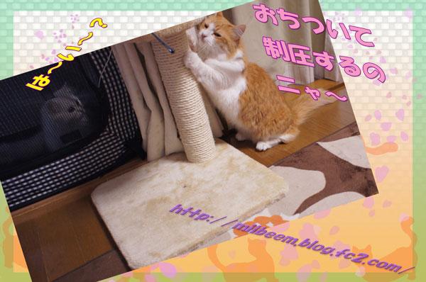 kyoriP3_02.jpg