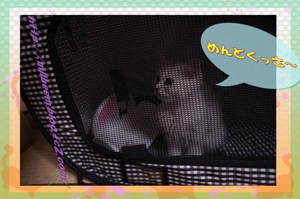kyoriP3_06.jpg
