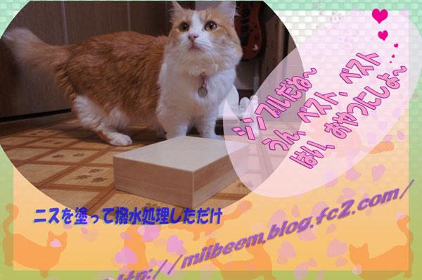 misunomidai004.jpg