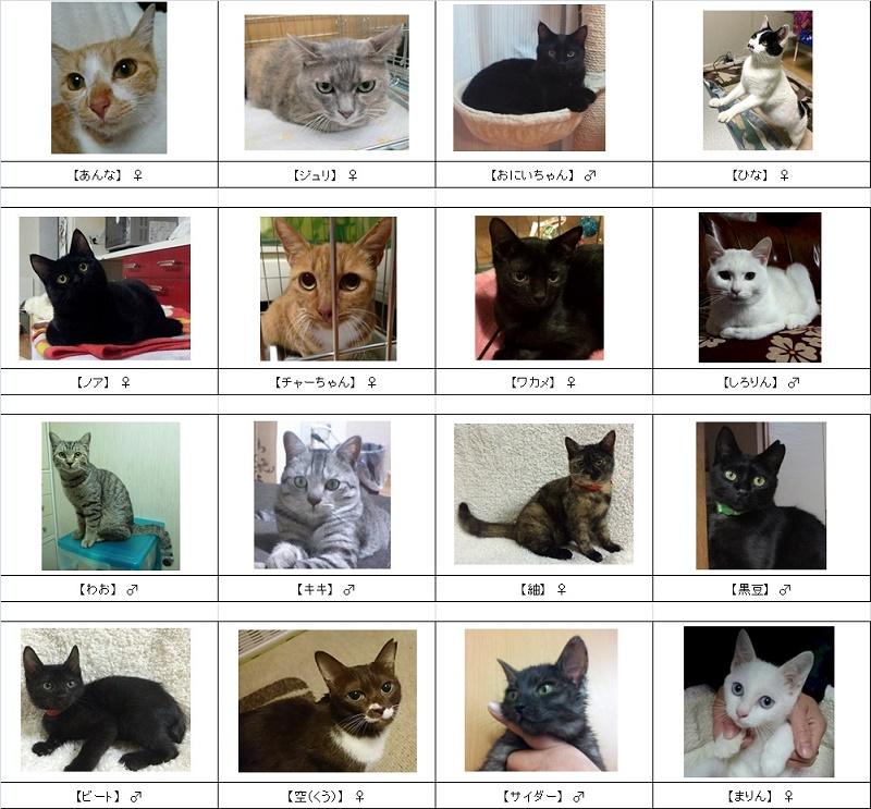 2015猫リスト1