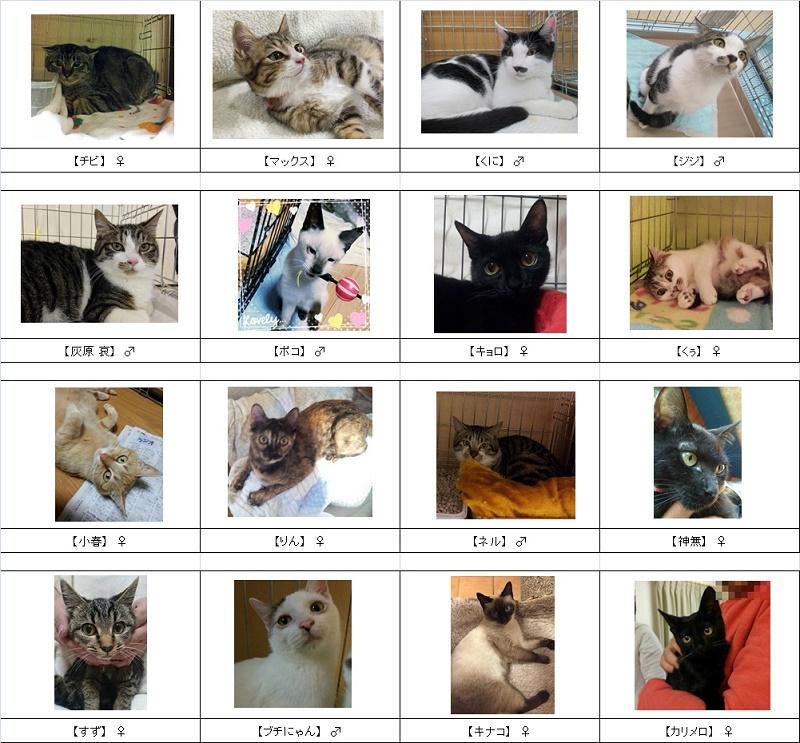 2015猫リスト2