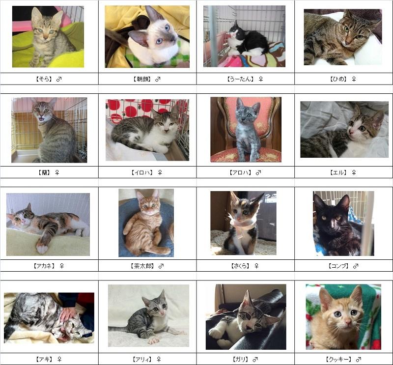 2015猫リスト4