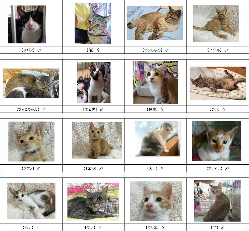 2015猫リスト7