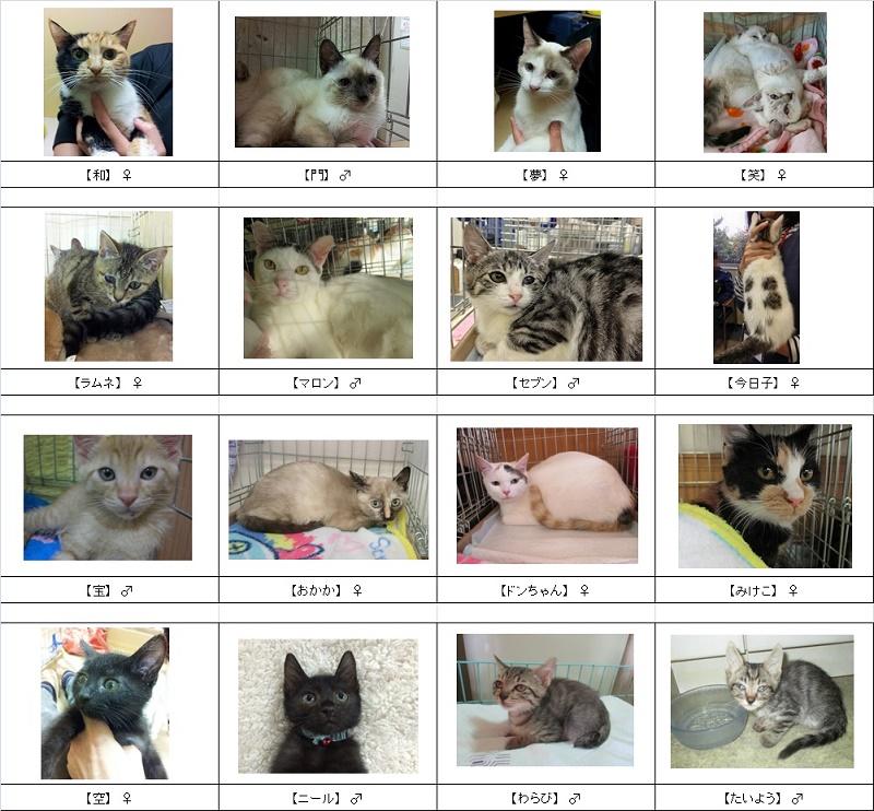 猫リスト修正2