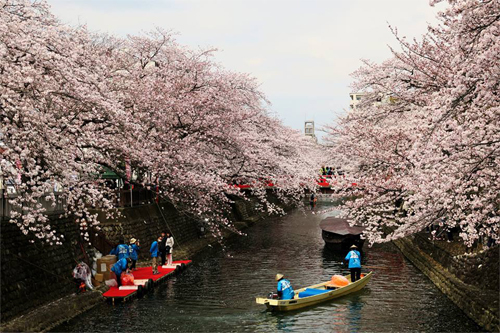 船町桜201604