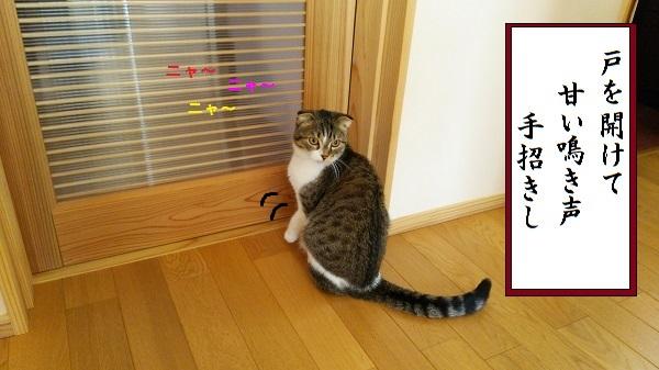 川柳 ドア開けて