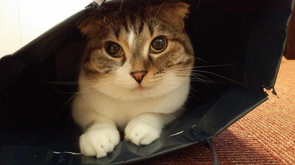 袋の中のゴンちゃん
