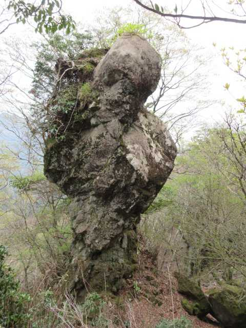 IMG2384JPG奇岩にもシャクナゲ