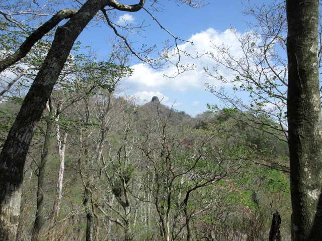 IMG2578JPG樹間から鹿納坊主