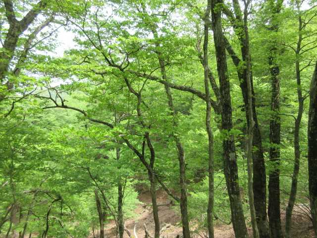 IMG2782JPG求菩提山登山道の新緑