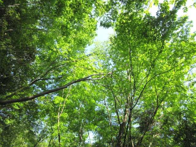 IMG2677JPG林道の新緑