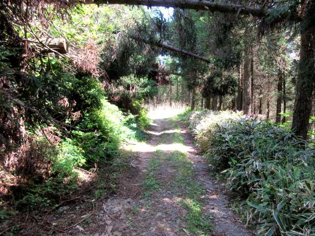 IMG3034JPG明るい林道