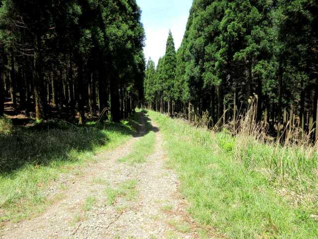 IMG3060JPG鼻くぐり岩への林道
