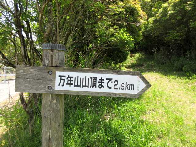 IMG3066JPG木段が見えている山頂コース