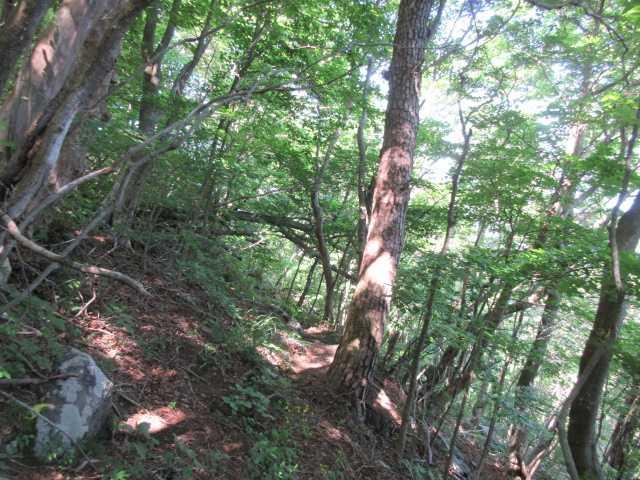 IMG3321JPG歩き易い樹林道秋紅葉時も歩いた