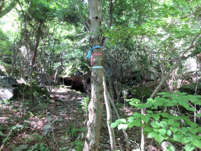 IMG3332JPG大岩の木に分岐のテープここで進路探しに苦労
