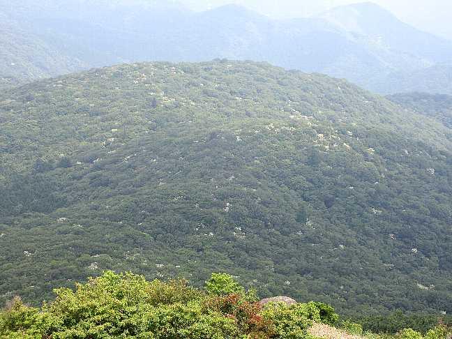IMG3732JPGヤマボウシの山