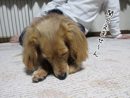 kinako4541.jpg