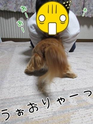 kinako4544.jpg