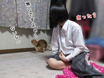 kinako4547.jpg